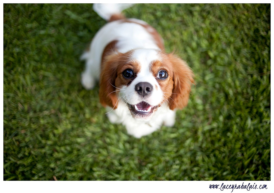 7 Things Every Pet Owner Must Know 7 Things Every Pet Owner Must Know new images