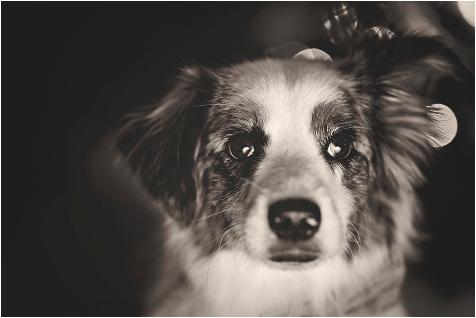 8 Tips to Photograph Dogs on the Move