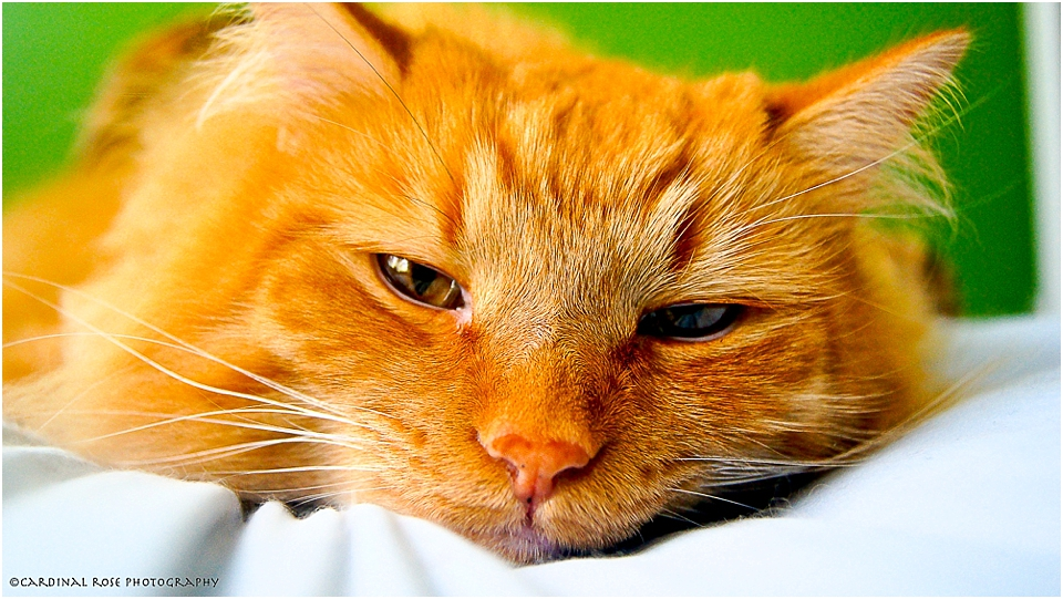 5 Tips for taking Great Cat Photos