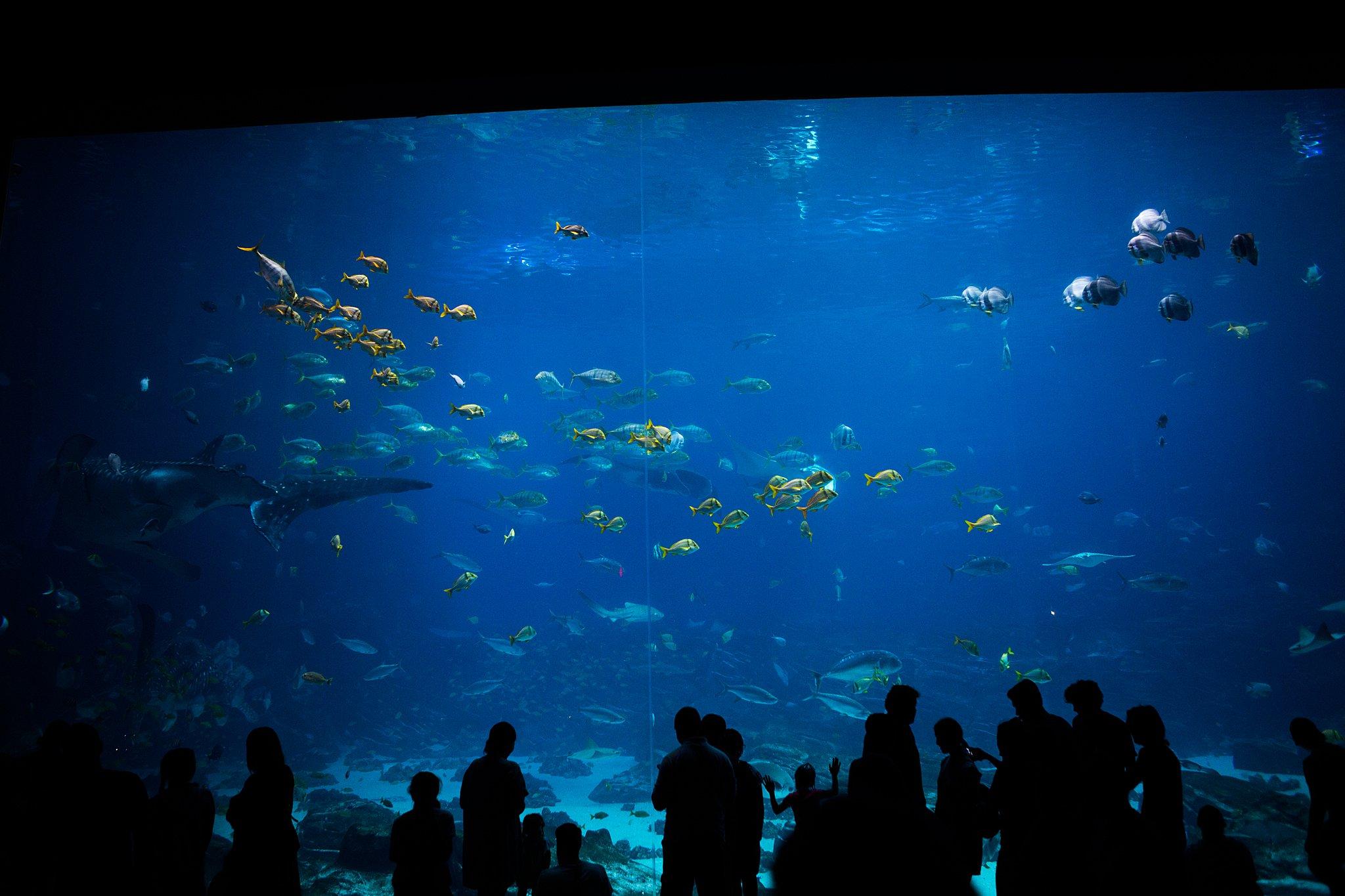 dark aquarium picture