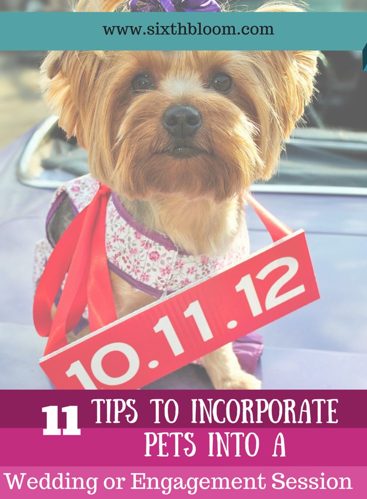 11-tips-to-incorporate-pets-into-your-engagement-or-wedding-session