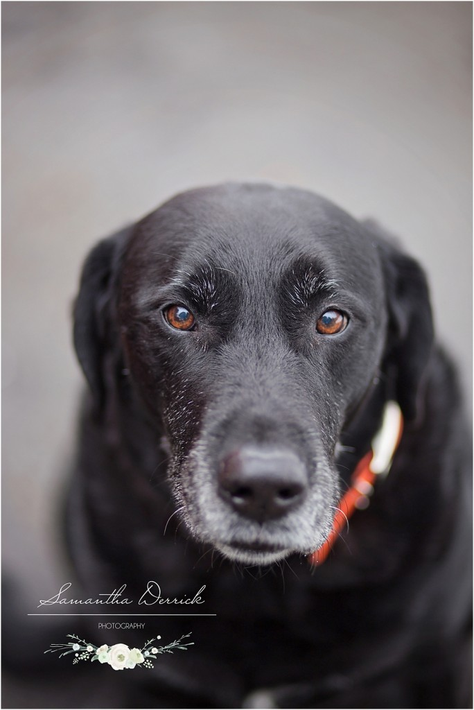 professional pet photography of a dog