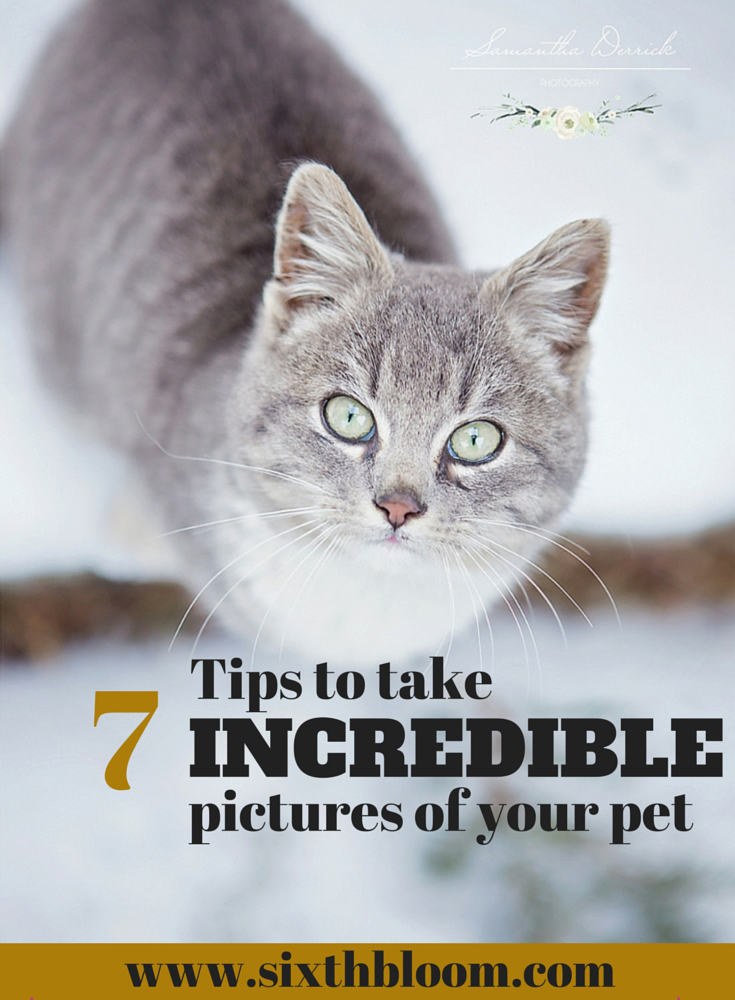 7 Tips to take Incredible Pictures of your Pet