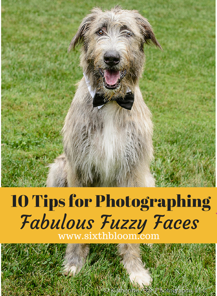 10 Tips for Photographing  Fabulous Furry Faces