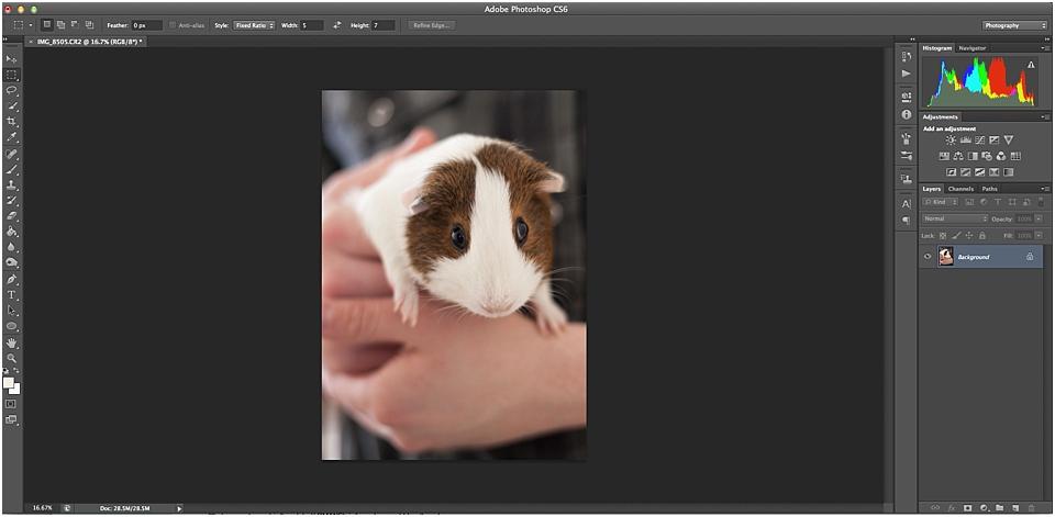 photoshop crop tool