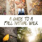 A Guide to a Photo Nature Walk + FREE Printable