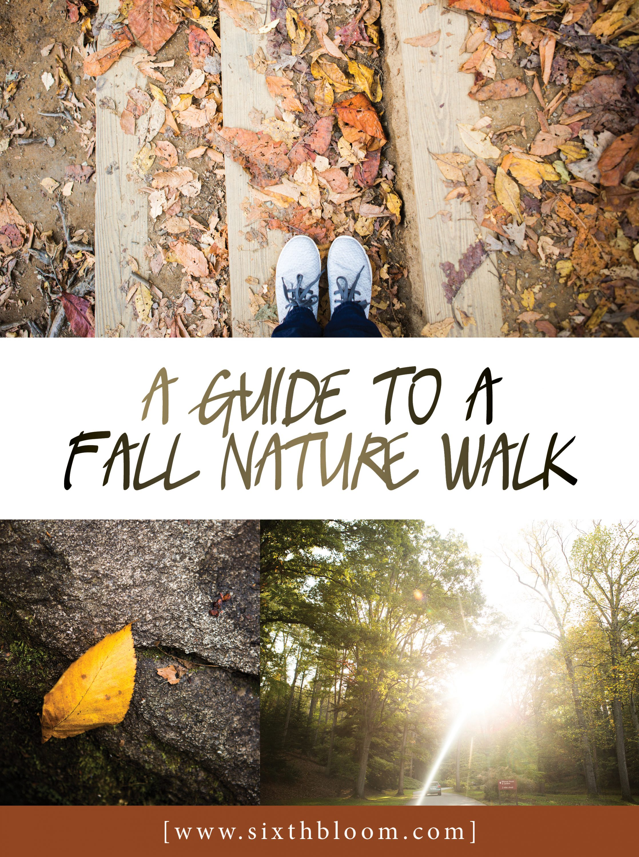 A Guide to a Photo Nature Walk
