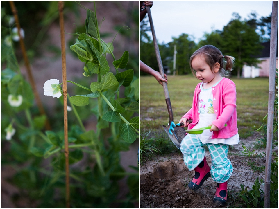gardening projects for preschoolers