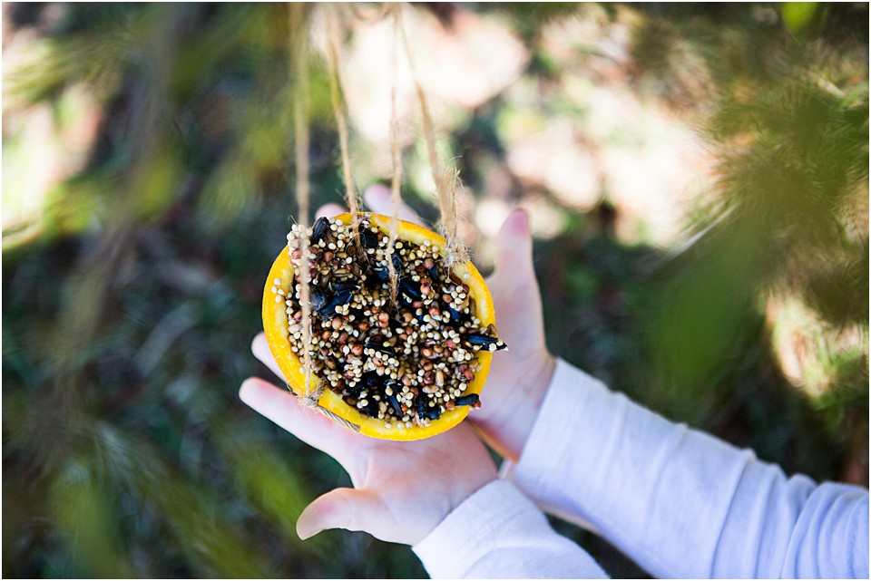 Easy DIY Bird Feeders