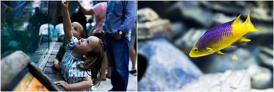 kids enjoying the fish at the new orleans aquarium