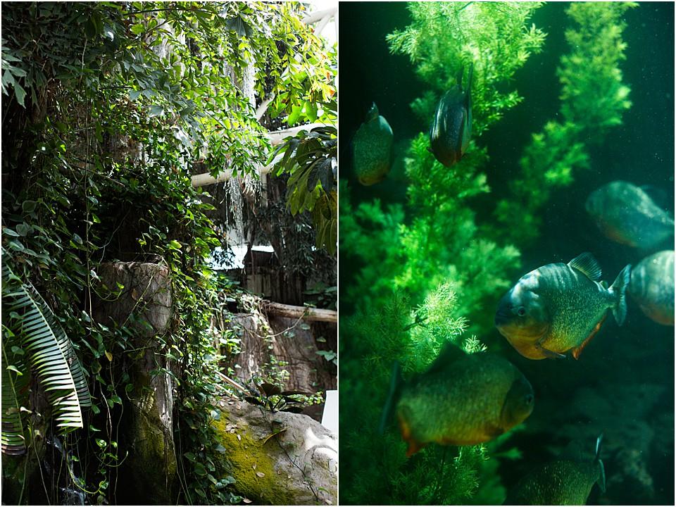 sea life at the nola aquarium