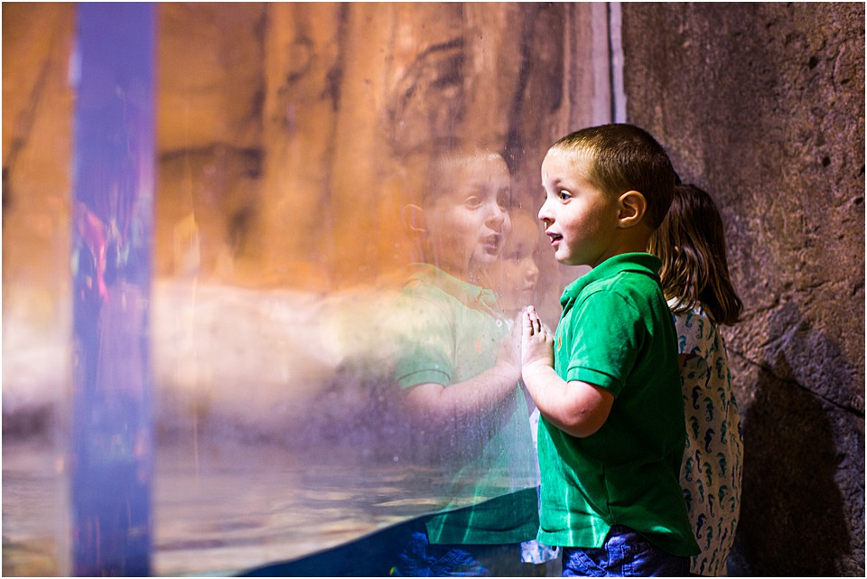 little boy looking through glass at the otters
