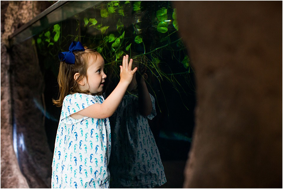 little girl looking through glass at alligator