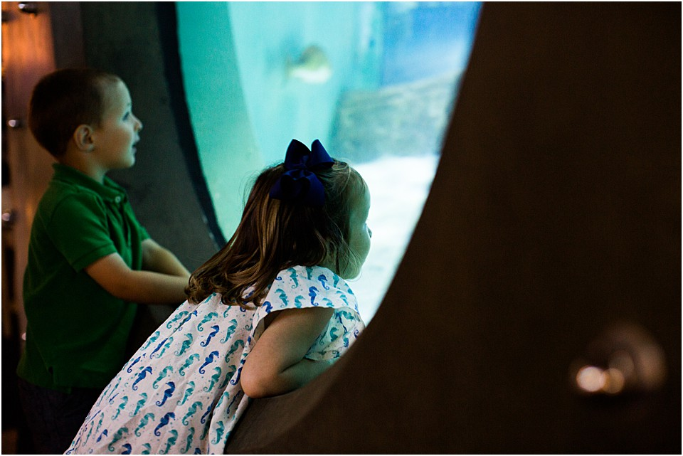 peeking through glass watching the sharks at the aquarium
