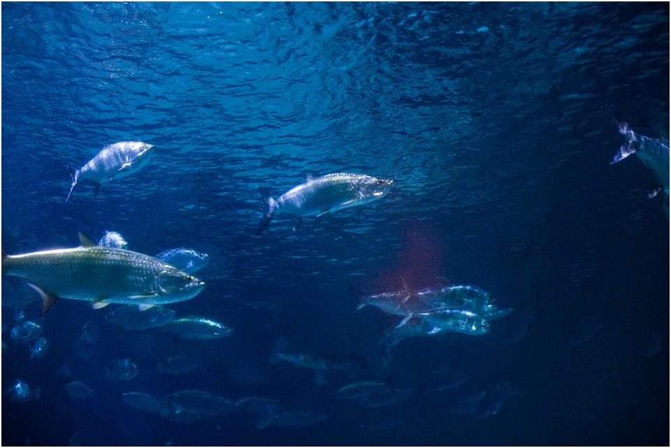 fish in the tank at the aquarium of americas