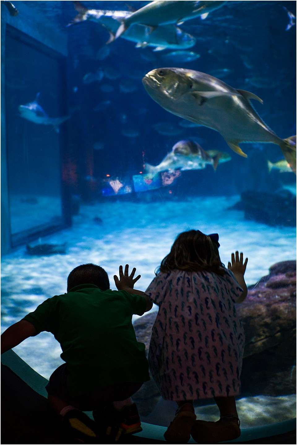 watching the stingrays at the aquarium
