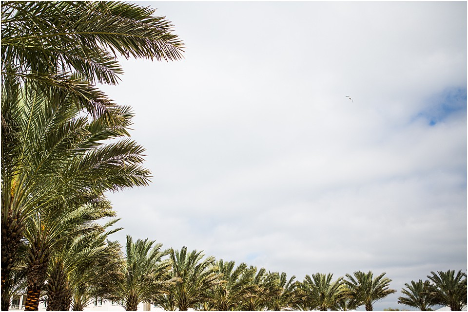 palm trees with blue sky in seaside florida