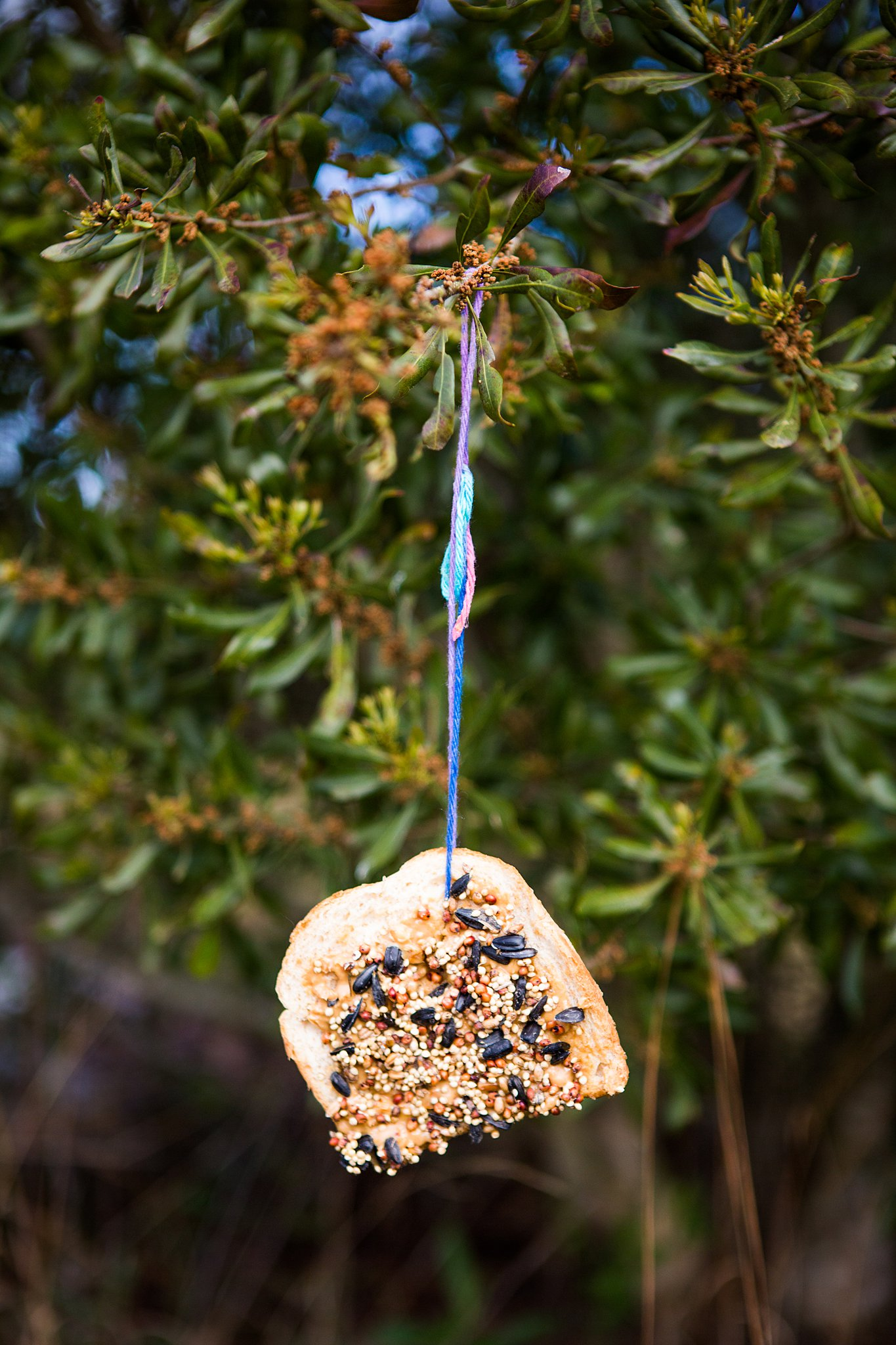 homemade bird feeder hanging on tree