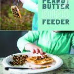 Peanut butter bird feeder for kids to make