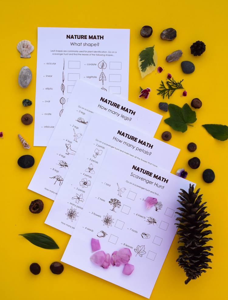nature items used for learning math skills
