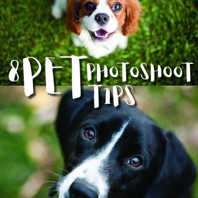 8 Pet Photoshoot Tips