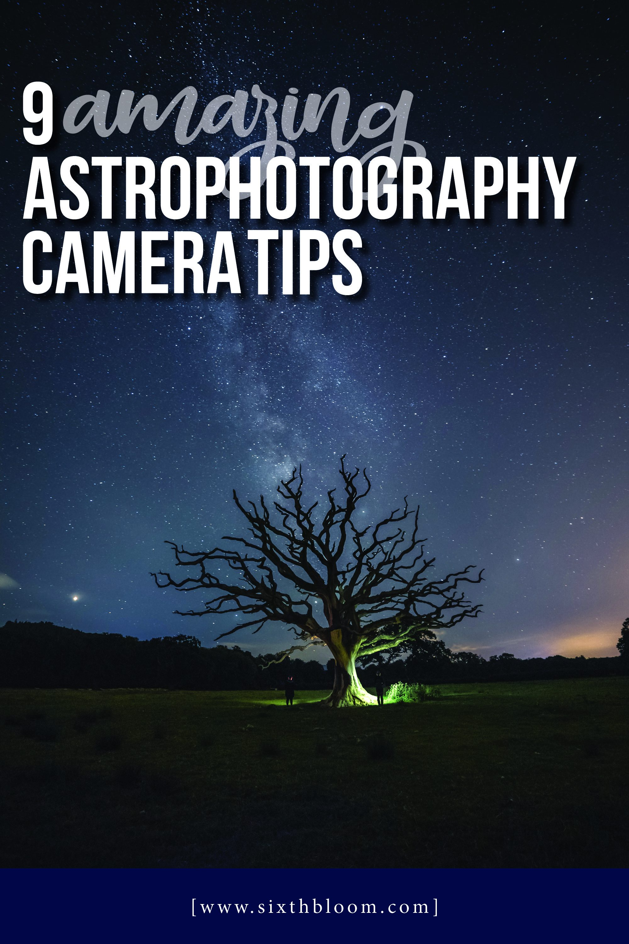 night photography of a tree and the milky way