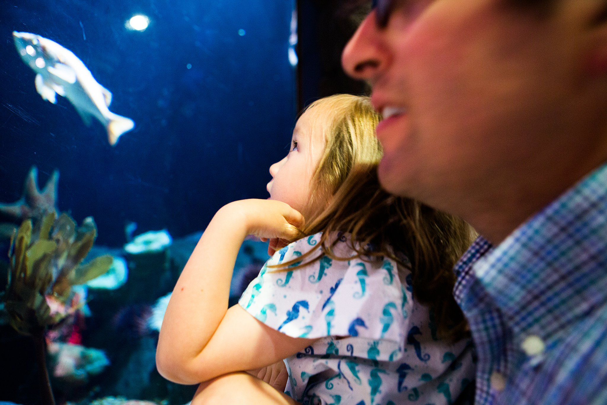 little girl looking at fish at aquarium