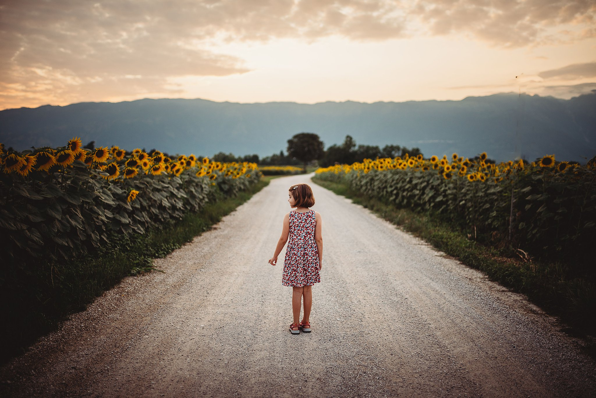 little girl traveling the world in a sunflower field