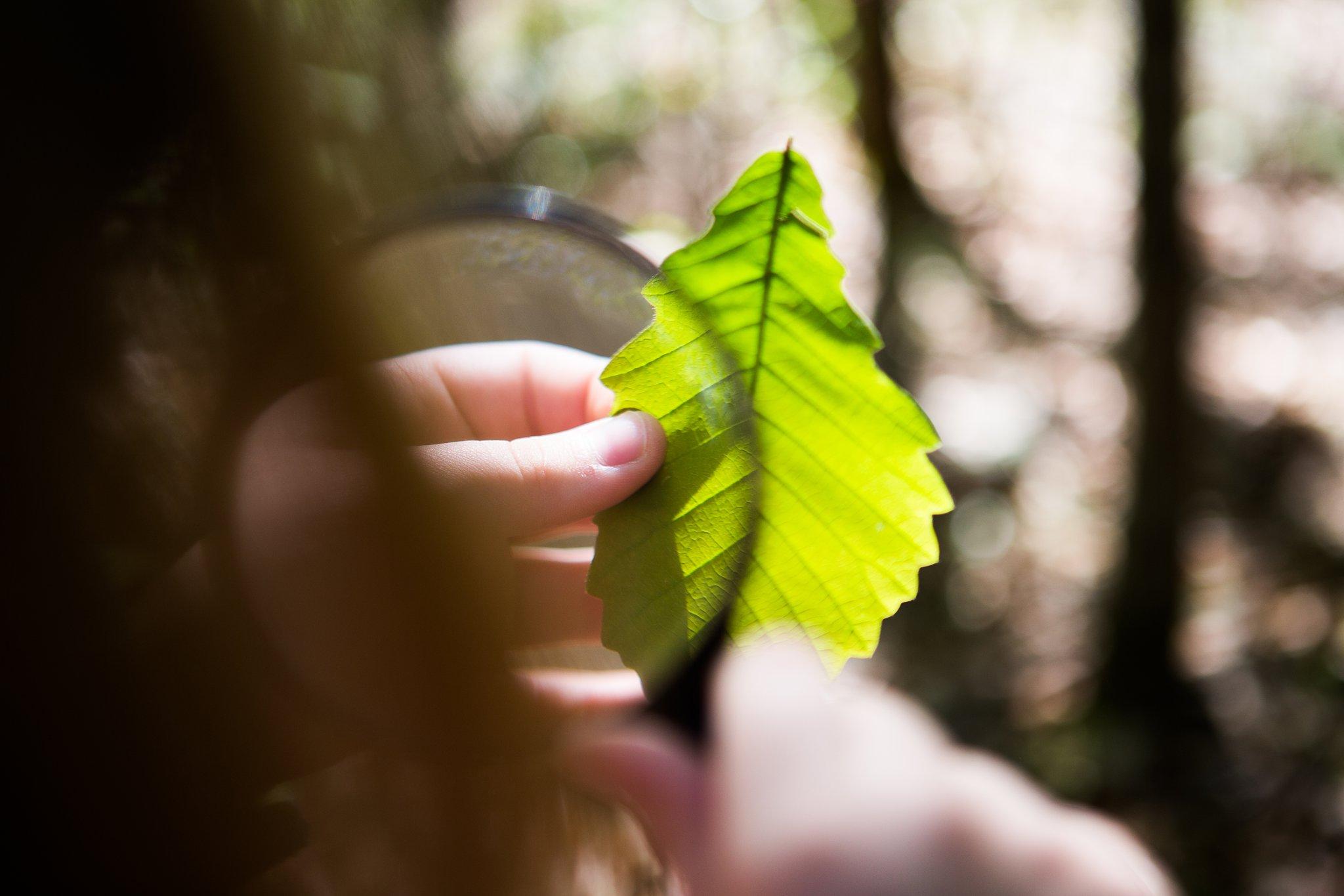leaf from a scavenger hunt find