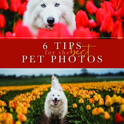 6 Tips for the Best Pet Photos