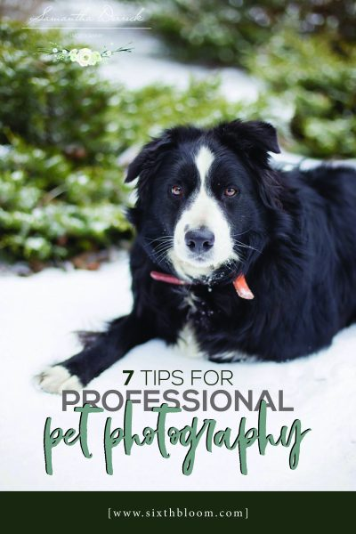 tips to take professional pet photography of your dogs and cats