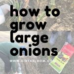 learn to grow onions