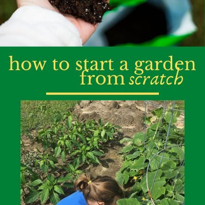 How to Start a Garden from Scratch
