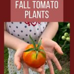 learning to grow tomatoes
